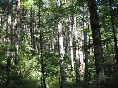 长白山野生动物种类已知1225种