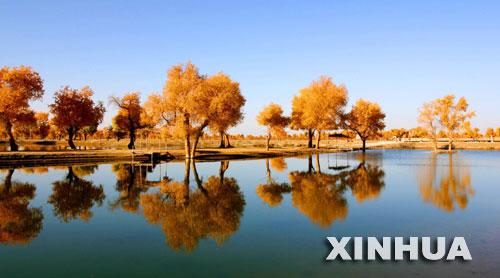 11月17日拍摄的新疆尉犁县境内塔里木河下游的胡杨林。经过多年的综合治理,塔里木河下游生态面貌得到改善,许多胡杨重新焕发生机。 新华社发(任玉勇 摄)