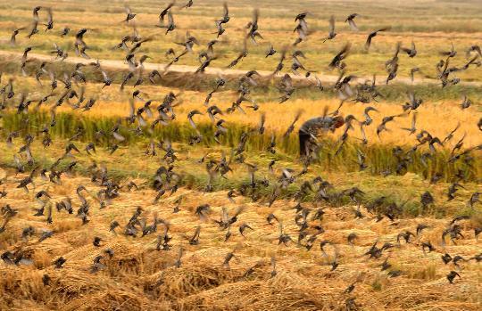 图文:(生态)(1)禽鸟重返塔里木河