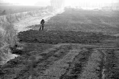 工程废料被倒入数百亩耕地 镇政府称是肥料