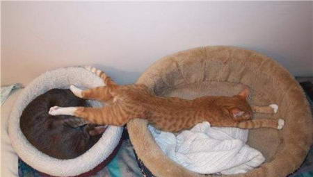 世界睡眠日:动物可爱睡姿大集锦