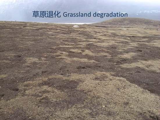 青海省海南州三江源区草地退化成因及治理对策