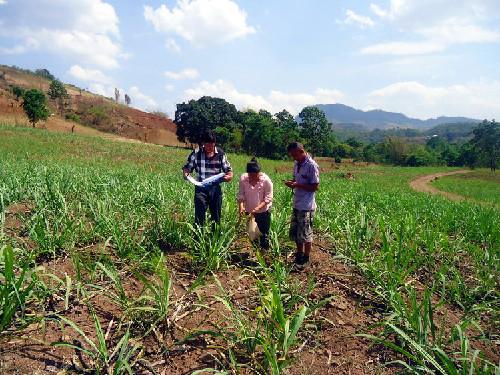 土壤污染危害大 农产品首当其冲受影响