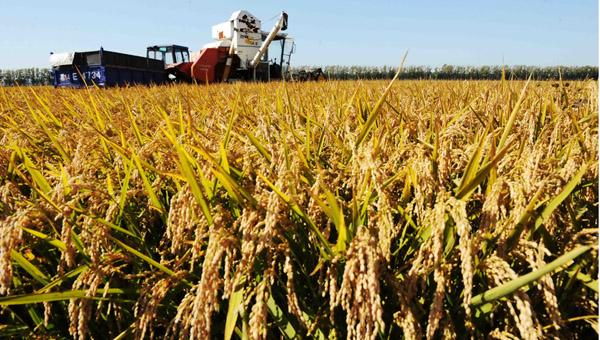 中国农业机械总动力约10.2亿千瓦,有效灌溉面积达6303万公顷,节水灌溉面积达3122万公顷