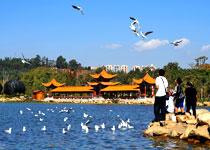 低碳引领发展 云南呈贡打造高原湖滨生态城市
