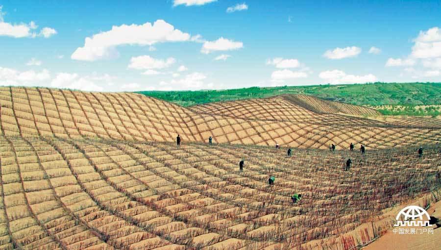 生态建设:网格状的沙障