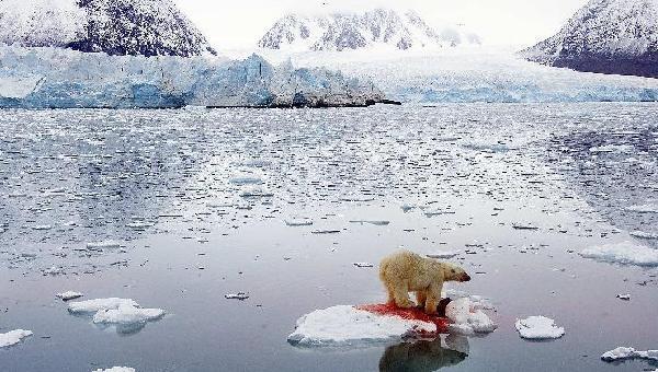 """飓风、洪涝、暴雪、干旱、冰川融化……当人类活动导致的气候变化给自身带来灾难,和我们一起生存在地球上的种种生灵也面临同样的危机。当前,应对气候变化已刻不容缓,为了""""我们"""",也为了""""它们""""。这是2006年拍摄的挪威北部斯瓦尔巴德群岛水域一块浮冰上的北极熊。由于全球气候变暖,这里的积冰正在加速溶化。"""