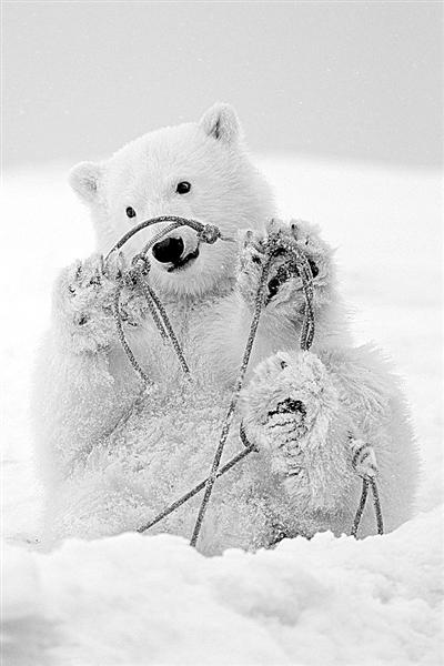 熊宝宝素描大全可爱