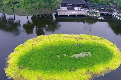 杭州污染水源 毒死水草枯黄蔓延