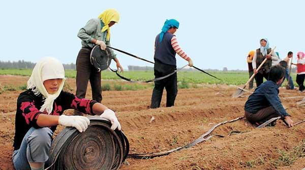 张世钢:改善荒漠化不一定让居民迁离自己的土地