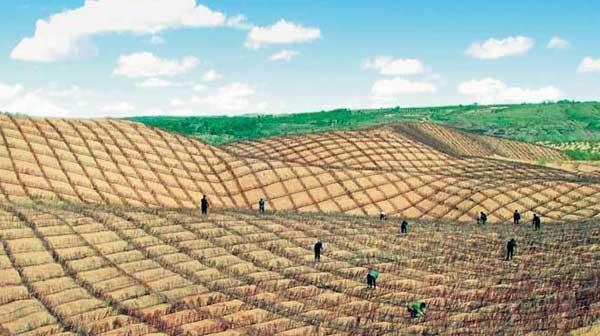 张世钢:荒漠化治理对推动全球可持续发展有积极作用