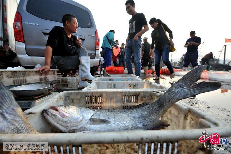小港码头海鲜市场,新近捕获的大鲈鱼正在销售