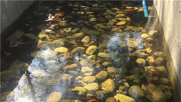 """人工湿地""""赶走""""生活污水:走访山区无动力水资源项目"""