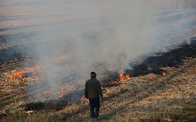 农田焚烧秸秆屡禁不止 回收费时费力利润低