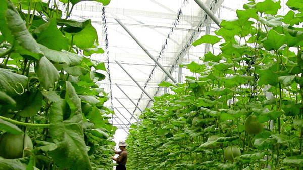 我国农业发展迫切需要推进供给侧结构性改革