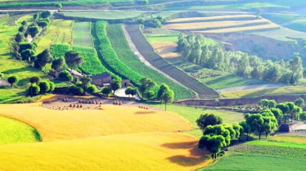 中央首提农业供给侧结构性改革 农民盼切实提质增效