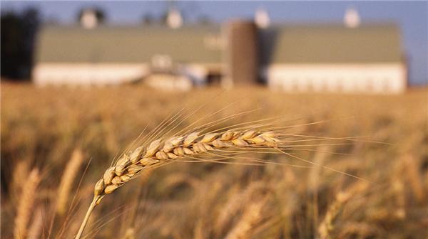人大代表隋熙明:解决农民致富问题是城里人的责任