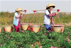 海南脱贫军令状:2016年18万农村贫困人口脱贫