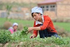 宁夏脱贫军令状:2016年确保19万人脱贫