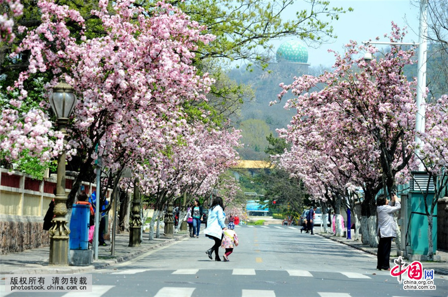 青岛八大关春天图片