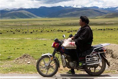 【中国故事】高城理塘 藏族牧民的好日子