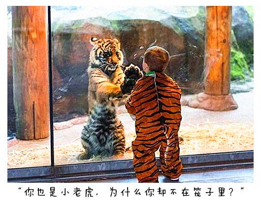 素描老虎的步骤图解彩铅全身