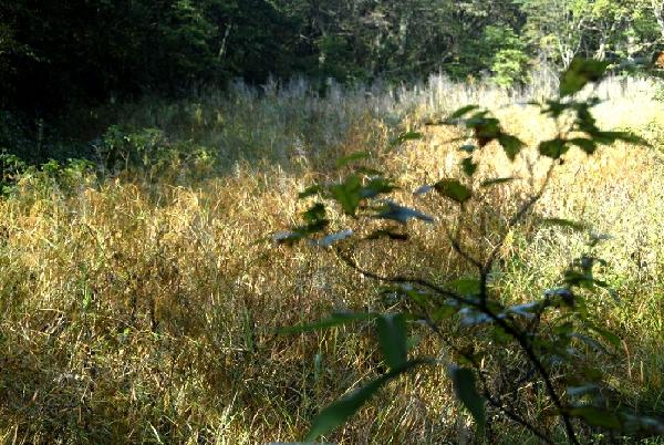 黄山/在千米黄山之巅的西海景区,有一处只长草,没有任何树木,甚至...