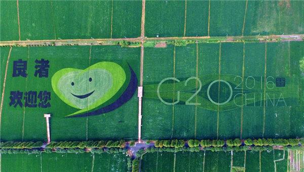 """这也许是杭州最文艺的稻田了,从空中俯瞰余杭区良渚街道大陆村粮食功能区的千亩稻田,一个宽逾百米的G20峰会LOGO和巨大的""""良渚欢迎您""""卡通笑脸图,已经清晰地呈现于大地之上。"""