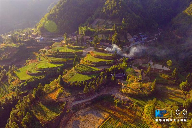 图为10月3日拍摄的湖北省利川市毛坝镇楠木村茶园.