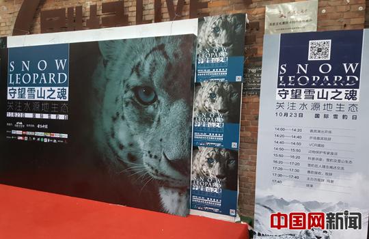 动物雪豹最快速度是多少