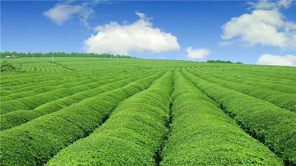 推进农业供给侧结构性改革如何激活要素市场?