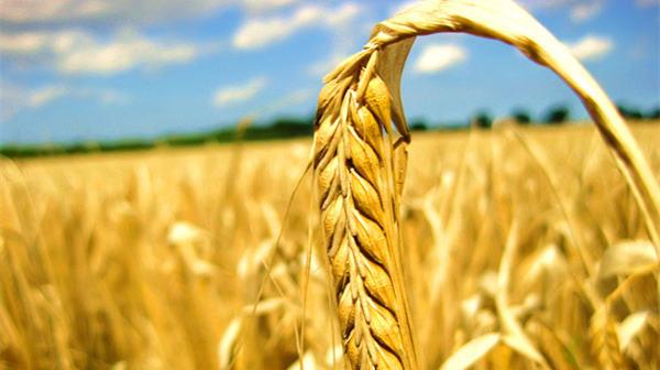 推进农业供给侧结构性改革如何增加农民的收入?