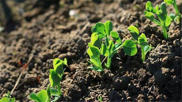 彭功明:化肥造成土壤毒化 影响食品安全