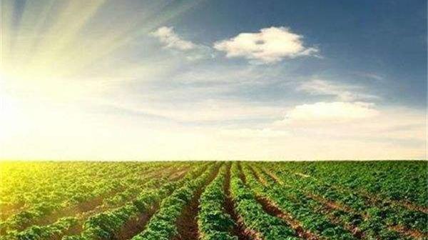 宋洪远:浅谈农业供给侧改革总体部署要求