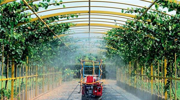宋洪远:以推进农业供给侧结构性改革为主线