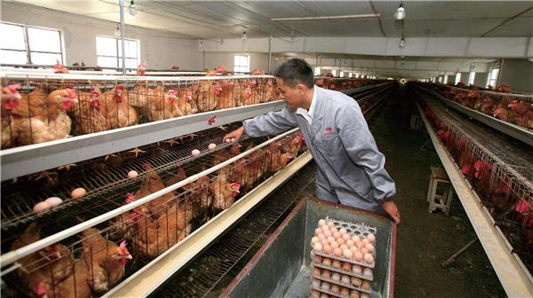 宋洪远:如何推进农村创业创新?
