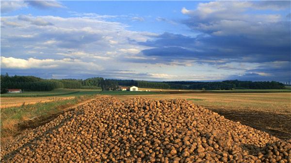 郑新立解读中国农村土地制度面临的问题