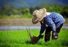 解讀政府工作報告:把促進農民增收擺在更突出的位置