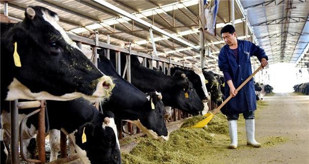 河北武强:现代牧业助推精准扶贫