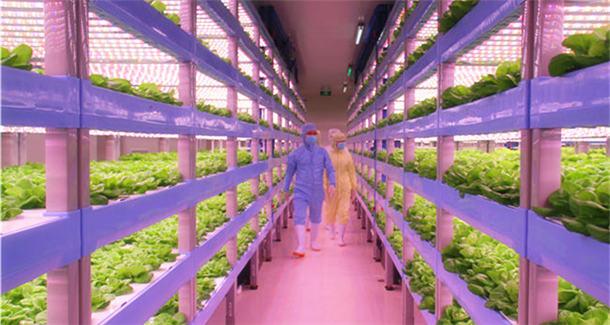 """神奇的植物工厂 """"光配方""""的现代农业"""