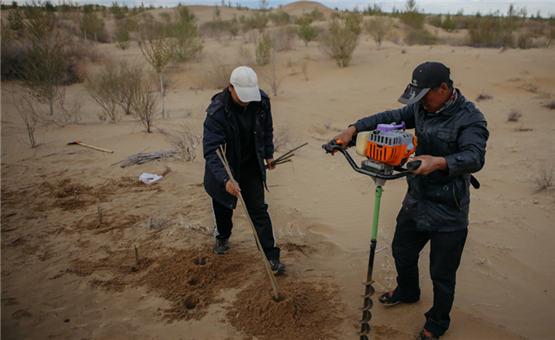 镜头中的脱贫故事:库布其沙漠中的生机