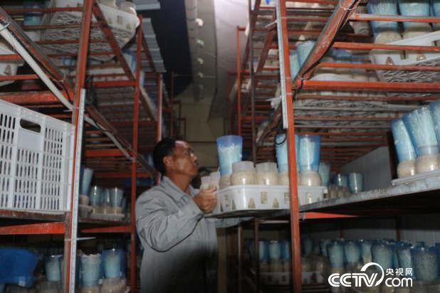 """在赣州最大的菌菇企业出菇车间里,刘汉财把已经长出菌的""""瓶瓶罐罐""""搬上搬下。"""
