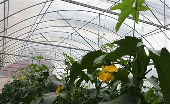 【鏡頭中的脫貧故事】一天十萬遊客 瑞金這家農博園如何成為扶貧經典案例?