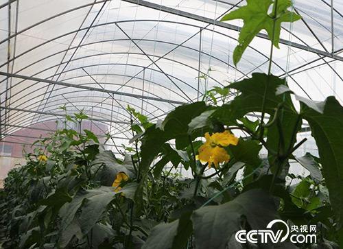 蔬菜产业已成为瑞金产业扶贫的主导产业。