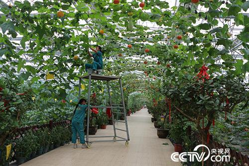现代农业博览园吸纳了附近160多位村民就业。