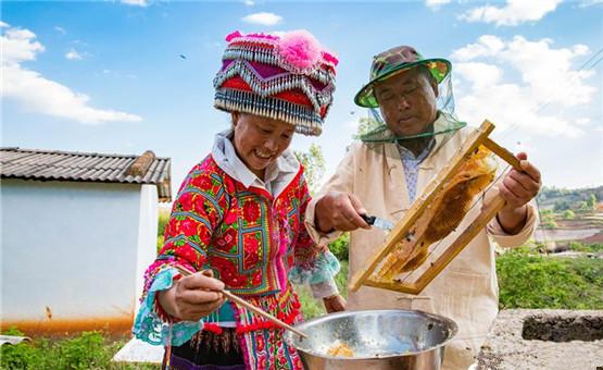 雲南彌勒醞釀甜蜜的養蜂人
