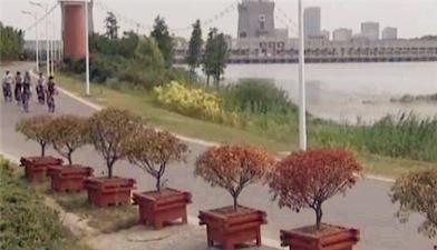 【来之不易的绿水青山】扬州廖家沟:昔日垃圾场 今日绿色长廊