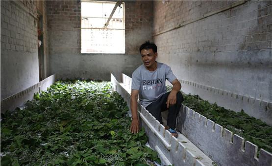 【鏡頭中的脫貧故事】種桑養蠶 從貧困戶到年入8萬的轉變