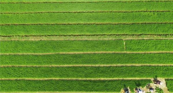 山东省临沂市郯城县忙完麦收的农民抢抓农时忙夏种