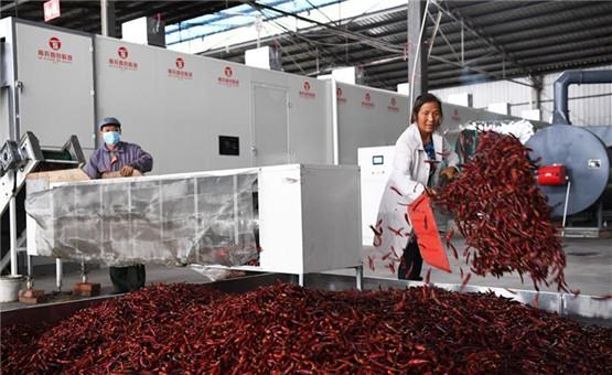 重庆石柱:辣椒产业助力脱贫攻坚